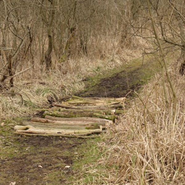 Der teilweise sumpfige Wanderweg wird von fleißigen Heinzelmännchen gangbar gehalten