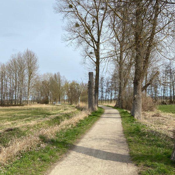 Pappelallee am Klöterpottsweg